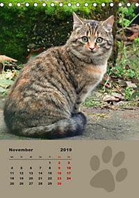 Wilde Tätzchen (Tischkalender 2019 DIN A5 hoch) - Produktdetailbild 11