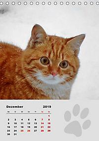 Wilde Tätzchen (Tischkalender 2019 DIN A5 hoch) - Produktdetailbild 12