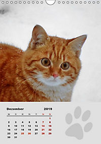Wilde Tätzchen (Wandkalender 2019 DIN A4 hoch) - Produktdetailbild 12