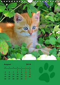 Wilde Tätzchen (Wandkalender 2019 DIN A4 hoch) - Produktdetailbild 8