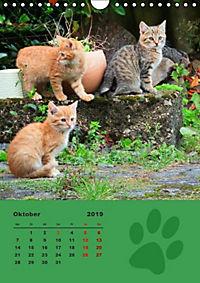 Wilde Tätzchen (Wandkalender 2019 DIN A4 hoch) - Produktdetailbild 10