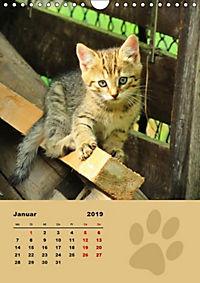 Wilde Tätzchen (Wandkalender 2019 DIN A4 hoch) - Produktdetailbild 1