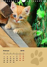 Wilde Tätzchen (Wandkalender 2019 DIN A4 hoch) - Produktdetailbild 2