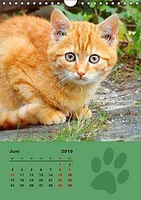 Wilde Tätzchen (Wandkalender 2019 DIN A4 hoch) - Produktdetailbild 6