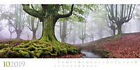 Wilde Wälder 2019 - Produktdetailbild 10