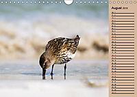 Wildes Deutschland - Unsere faszinierende Tierwelt (Wandkalender 2019 DIN A4 quer) - Produktdetailbild 7