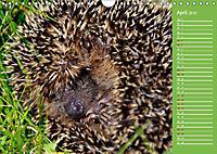 Wildes Deutschland - Unsere faszinierende Tierwelt (Wandkalender 2019 DIN A4 quer) - Produktdetailbild 2