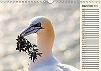 Wildes Deutschland - Unsere faszinierende Tierwelt (Wandkalender 2019 DIN A4 quer) - Produktdetailbild 9