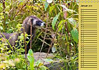 Wildes Deutschland - Unsere faszinierende Tierwelt (Wandkalender 2019 DIN A4 quer) - Produktdetailbild 1
