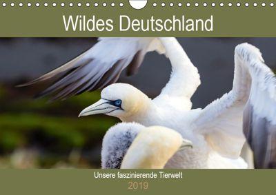 Wildes Deutschland - Unsere faszinierende Tierwelt (Wandkalender 2019 DIN A4 quer), Janita Webeler