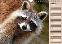 Wildes Deutschland - Unsere faszinierende Tierwelt (Wandkalender 2019 DIN A4 quer) - Produktdetailbild 3