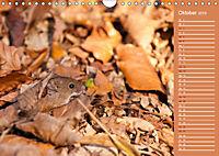 Wildes Deutschland - Unsere faszinierende Tierwelt (Wandkalender 2019 DIN A4 quer) - Produktdetailbild 10
