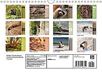 Wildes Deutschland - Unsere faszinierende Tierwelt (Wandkalender 2019 DIN A4 quer) - Produktdetailbild 13