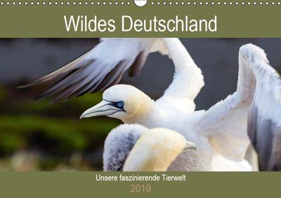 Wildes Deutschland - Unsere faszinierende Tierwelt (Wandkalender 2019 DIN A3 quer), Janita Webeler