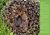 Wildes Deutschland - Unsere faszinierende Tierwelt (Wandkalender 2019 DIN A3 quer) - Produktdetailbild 4