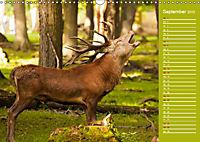Wildes Deutschland - Unsere faszinierende Tierwelt (Wandkalender 2019 DIN A3 quer) - Produktdetailbild 9