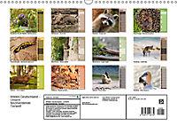 Wildes Deutschland - Unsere faszinierende Tierwelt (Wandkalender 2019 DIN A3 quer) - Produktdetailbild 13