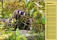 Wildes Deutschland - Unsere faszinierende Tierwelt (Wandkalender 2019 DIN A3 quer) - Produktdetailbild 1