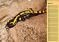 Wildes Deutschland - Unsere faszinierende Tierwelt (Wandkalender 2019 DIN A3 quer) - Produktdetailbild 5