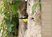 Wildes Deutschland - Unsere faszinierende Tierwelt (Wandkalender 2019 DIN A3 quer) - Produktdetailbild 6