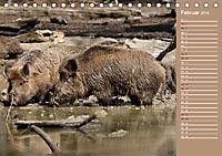 Wildes Deutschland - Unsere faszinierende Tierwelt (Tischkalender 2019 DIN A5 quer) - Produktdetailbild 2