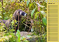 Wildes Deutschland - Unsere faszinierende Tierwelt (Tischkalender 2019 DIN A5 quer) - Produktdetailbild 1