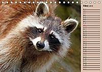 Wildes Deutschland - Unsere faszinierende Tierwelt (Tischkalender 2019 DIN A5 quer) - Produktdetailbild 3