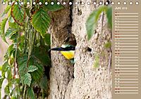 Wildes Deutschland - Unsere faszinierende Tierwelt (Tischkalender 2019 DIN A5 quer) - Produktdetailbild 6