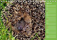 Wildes Deutschland - Unsere faszinierende Tierwelt (Tischkalender 2019 DIN A5 quer) - Produktdetailbild 4