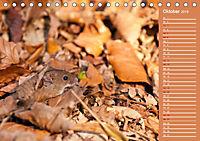 Wildes Deutschland - Unsere faszinierende Tierwelt (Tischkalender 2019 DIN A5 quer) - Produktdetailbild 10