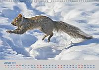 Wildes Kanada (Wandkalender 2019 DIN A3 quer) - Produktdetailbild 1