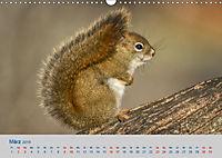 Wildes Kanada (Wandkalender 2019 DIN A3 quer) - Produktdetailbild 3