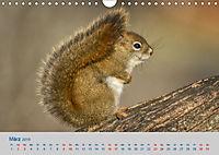 Wildes Kanada (Wandkalender 2019 DIN A4 quer) - Produktdetailbild 3
