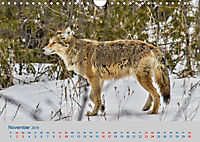 Wildes Kanada (Wandkalender 2019 DIN A4 quer) - Produktdetailbild 11