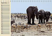 Wildes Leben in Botswana (Tischkalender 2019 DIN A5 quer) - Produktdetailbild 9