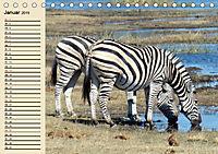 Wildes Leben in Botswana (Tischkalender 2019 DIN A5 quer) - Produktdetailbild 1