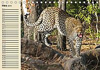 Wildes Leben in Botswana (Tischkalender 2019 DIN A5 quer) - Produktdetailbild 3