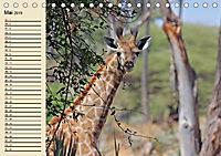 Wildes Leben in Botswana (Tischkalender 2019 DIN A5 quer) - Produktdetailbild 5