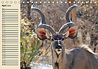 Wildes Leben in Botswana (Tischkalender 2019 DIN A5 quer) - Produktdetailbild 4