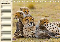 Wildes Leben in Botswana (Tischkalender 2019 DIN A5 quer) - Produktdetailbild 12