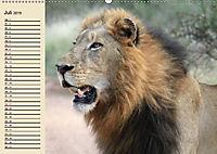 Wildes Leben in Botswana (Wandkalender 2019 DIN A2 quer) - Produktdetailbild 7