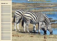 Wildes Leben in Botswana (Wandkalender 2019 DIN A2 quer) - Produktdetailbild 1