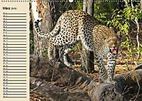 Wildes Leben in Botswana (Wandkalender 2019 DIN A2 quer) - Produktdetailbild 3