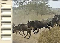 Wildes Leben in Botswana (Wandkalender 2019 DIN A2 quer) - Produktdetailbild 6