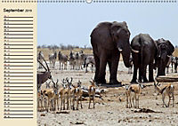 Wildes Leben in Botswana (Wandkalender 2019 DIN A2 quer) - Produktdetailbild 9