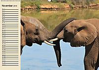 Wildes Leben in Botswana (Wandkalender 2019 DIN A2 quer) - Produktdetailbild 11