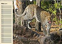 Wildes Leben in Botswana (Wandkalender 2019 DIN A3 quer) - Produktdetailbild 3