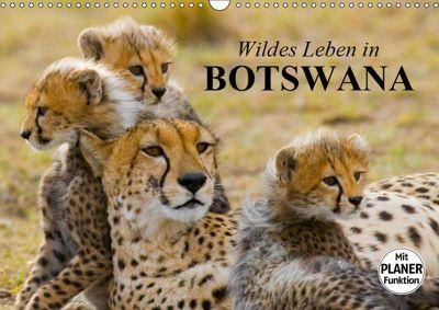 Wildes Leben in Botswana (Wandkalender 2019 DIN A3 quer), Elisabeth Stanzer