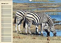 Wildes Leben in Botswana (Wandkalender 2019 DIN A3 quer) - Produktdetailbild 1