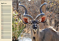 Wildes Leben in Botswana (Wandkalender 2019 DIN A3 quer) - Produktdetailbild 4